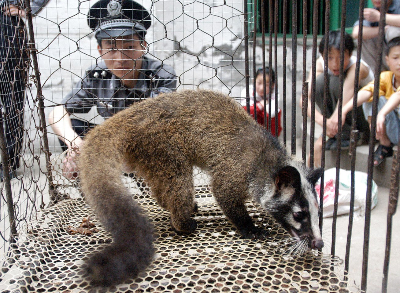 This file picture taken on 26 May 2003 shows a policeman watching over a civet cat captured in the wild by a farmer in Wuhan. The animal-borne SARS virus 17 years ago was supposed to be a wake-up call about consuming wildlife as food, but scientists say China's latest epidemic on 26 January 2020 indicates that the practice remains widespread and a growing risk to human health. (STR/AFP)