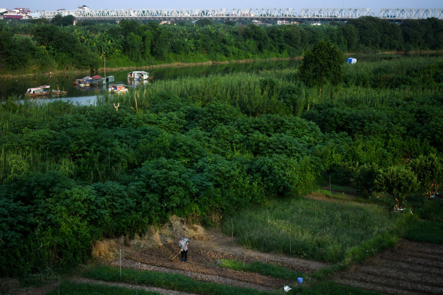 A Vietnamese woman works on a farm by the banks of Red River in Hanoi on September 3, 2019. (Photo by Manan VATSYAYANA / AFP)